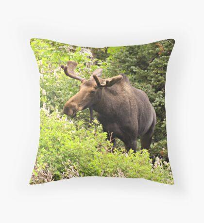 Bull Moose Side Shot  Throw Pillow