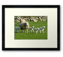 The Noise Of The Lambs Framed Print