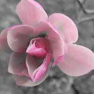 Magnolia  by Heather Crough