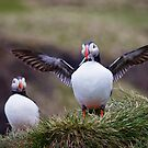 Proud Puffin by Peta Thames