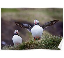 Proud Puffin Poster