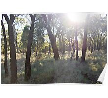 Late afternoon trees Poster