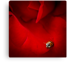 Ladybird In Rose Canvas Print