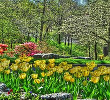 Yellow Tulips, Flower Garden at Woodward Park by bannercgtl10