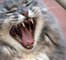 The Schmitty Yawn by David Misko