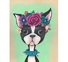 Whimsical Bam Bam Photographic Print