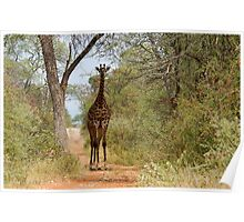 CAN I HELP, ARE YOU LOST? - GIRAFFE – Giraffa camelopardalis Poster