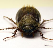 Beetle Mania by Cameron Hampton