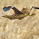 Straw Bird by Kenneth Haley
