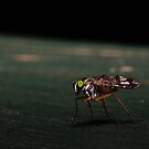 Small Fly Macro  by pnjmcc
