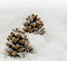 Fir Cones in a Snow Scene by MarkUK97