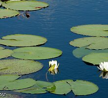 Water Lily #3 by Bryan W. Cole