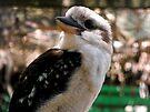 Kookaburra Smile by Kayleigh Walmsley