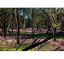 Annual Carpet Photographic Print