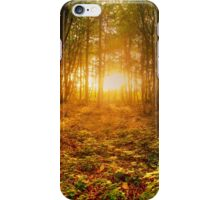 Winter Sun In The Woods iPhone Case/Skin