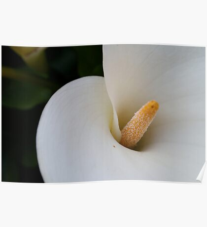 Flower ten Poster