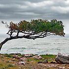 the tree by yiorgoseressios
