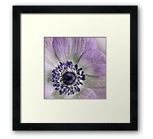 Fresh Anemones... (square) Framed Print