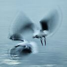Impressionist Seagulls by Robyn Forbes