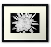 Queen of the Night No. 1 Framed Print
