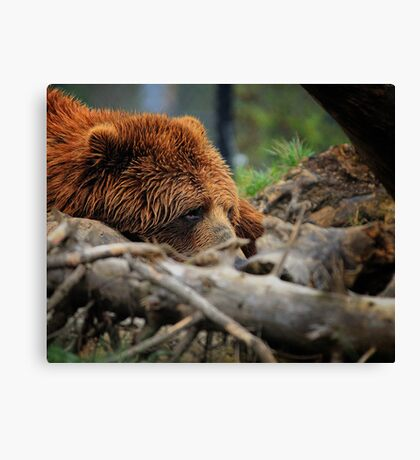 Kodiak Canvas Print