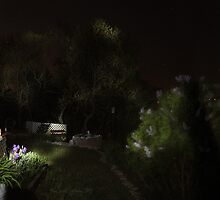 Stars Above the Garden by FrankSchmidt