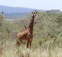 Girafe by Ben Fatma Marc