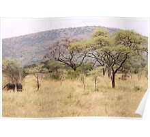 Akagera National Park Poster