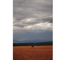 Russet-grey day Photographic Print