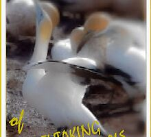 WELCOME BANNER - BREATHTAKING WILD ANIMALS & PLANTS by Magriet Meintjes