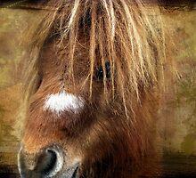 Kerry Bog Pony by Carol Bleasdale