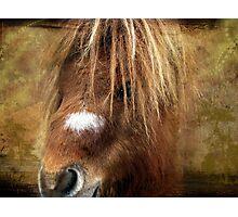 Kerry Bog Pony Photographic Print
