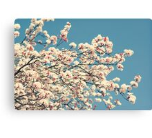 Day 255 - 21st March 2012 Canvas Print