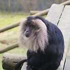 Old Man Monkey by laurenisawesome