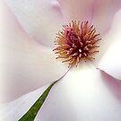 Tulip Magnolia... by LindaR