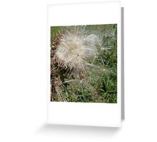 THISTLEDOWN Greeting Card