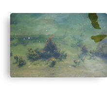 Underwwater Garden Canvas Print