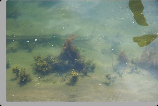 Underwwater Garden by Barry Doherty