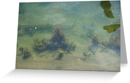 Underwwater Garden by Barry Doherty