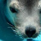 Zalophus Californianus Alias the Sea Lion by nadinecreates