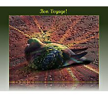 Bon Voyage - Greeting Card for Bird Lovers Photographic Print