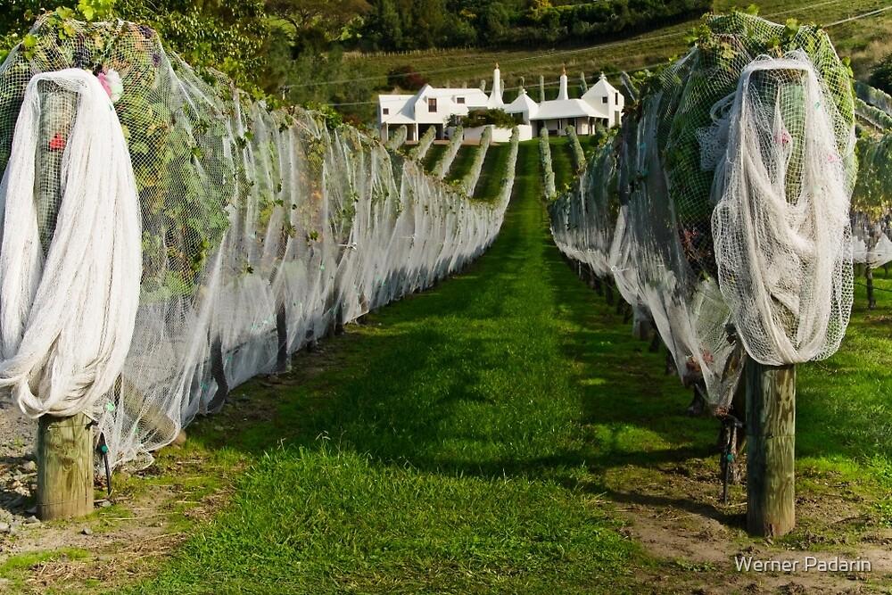 Vineyard 5 by Werner Padarin