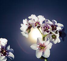 Flowers by Florian Wieser