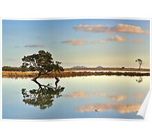 Lone Mangrove Dusk Poster
