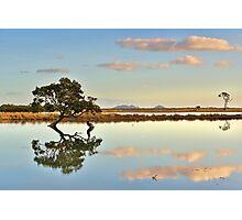 Lone Mangrove Dusk Photographic Print