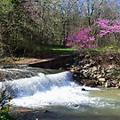 Springtime at Dogwood Canyon by John Carpenter