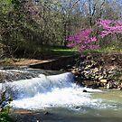 Springtime at Dogwood Canyon by John Carpenter