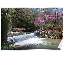 Springtime at Dogwood Canyon Poster