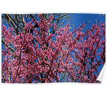 Spring in the Ozarks Poster