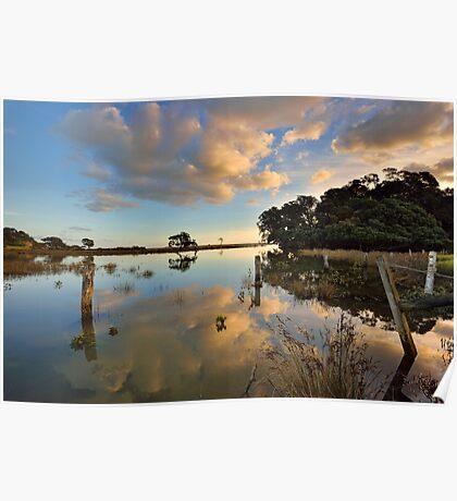 Waiaro Mangrove Reflections Poster